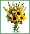 Here comes the sun and it's all bright, especially when it comes to this gorgeous bouquet. Anyone who receives this golden arrangement will definitely feel its warmth. As if green roses next to yellow sunflowers and snapdragons weren't brilliant enough, we've added white stock, green button spray chrysanthemums in a   vase.  Vase may vary.