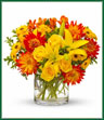 Just like a lively samba, this bouquet is an uninhibited celebration of summer. If flowers could dance, these would be burning up the dancefloor. Yellow roses, asiatic lilies, orange dahlias and alstroemeria, yellow daisy spray Viking chrysanthemums and oregonia are delightfully arranged in a clear cylinder vase. It will definitely inspire a samba celebration!