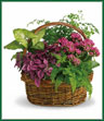 It will be no secret how you feel about the person lucky enough to receive this beautiful basket. Whether it's someone you work with or someone you live with. Someone near or someone far. This gift is overflowing with robust beauty and lively energy. A pink kalanchoe, hypoestes, green nephthytis and both Boston and maidenhair ferns are delivered in a delightful round wicker basket. Plants may vary.